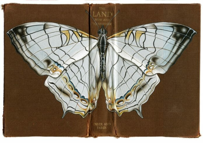 Moth on a Book by Rose Sanderson