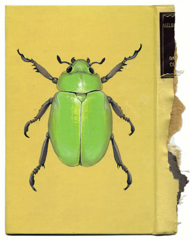 Insect Art on a Book by Rose Sanderson