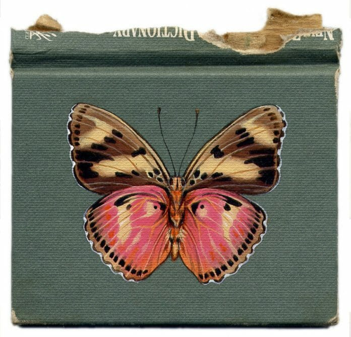 Butterfly on a Book by Rose Sanderson
