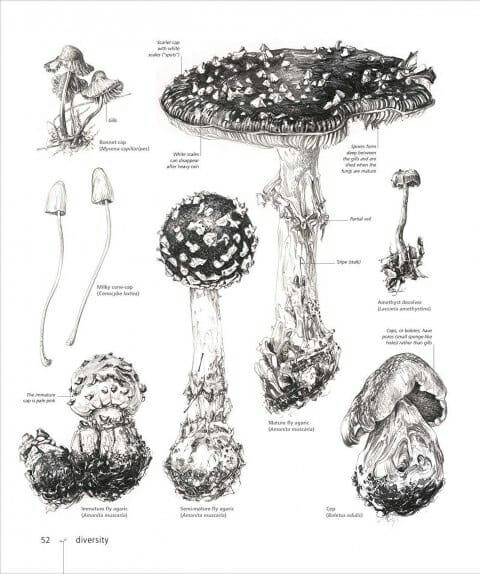 Natural Forms Fungi