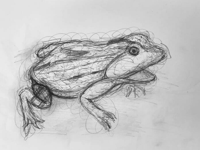 Gestural drawing of a frog