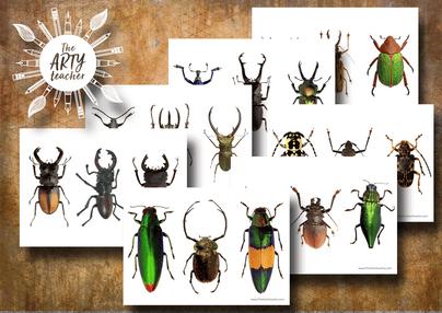 Beetles Art Resource