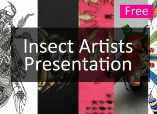 insect artists presentation