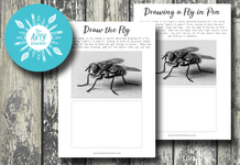 Drawing a Fly