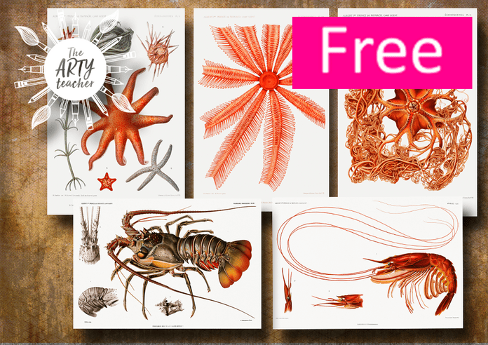 Marine Life for Art Projects