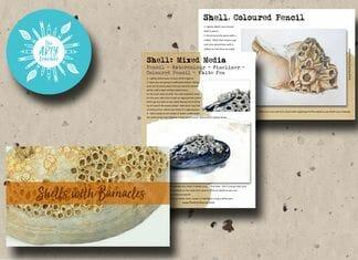 Barnacle Shells Cover