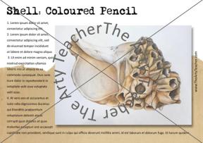 drawing barnacle shells