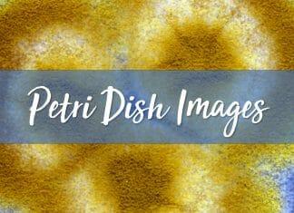 Petri Dish Images