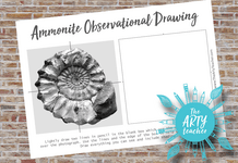 Ammonite Observational Drawing