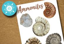 Ammonite Resource Sheet