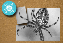 Collaborative Spider Artwork
